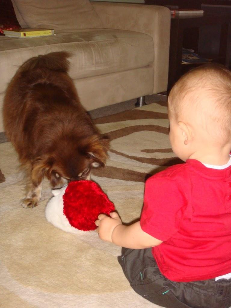 Dog, santa toy, baby